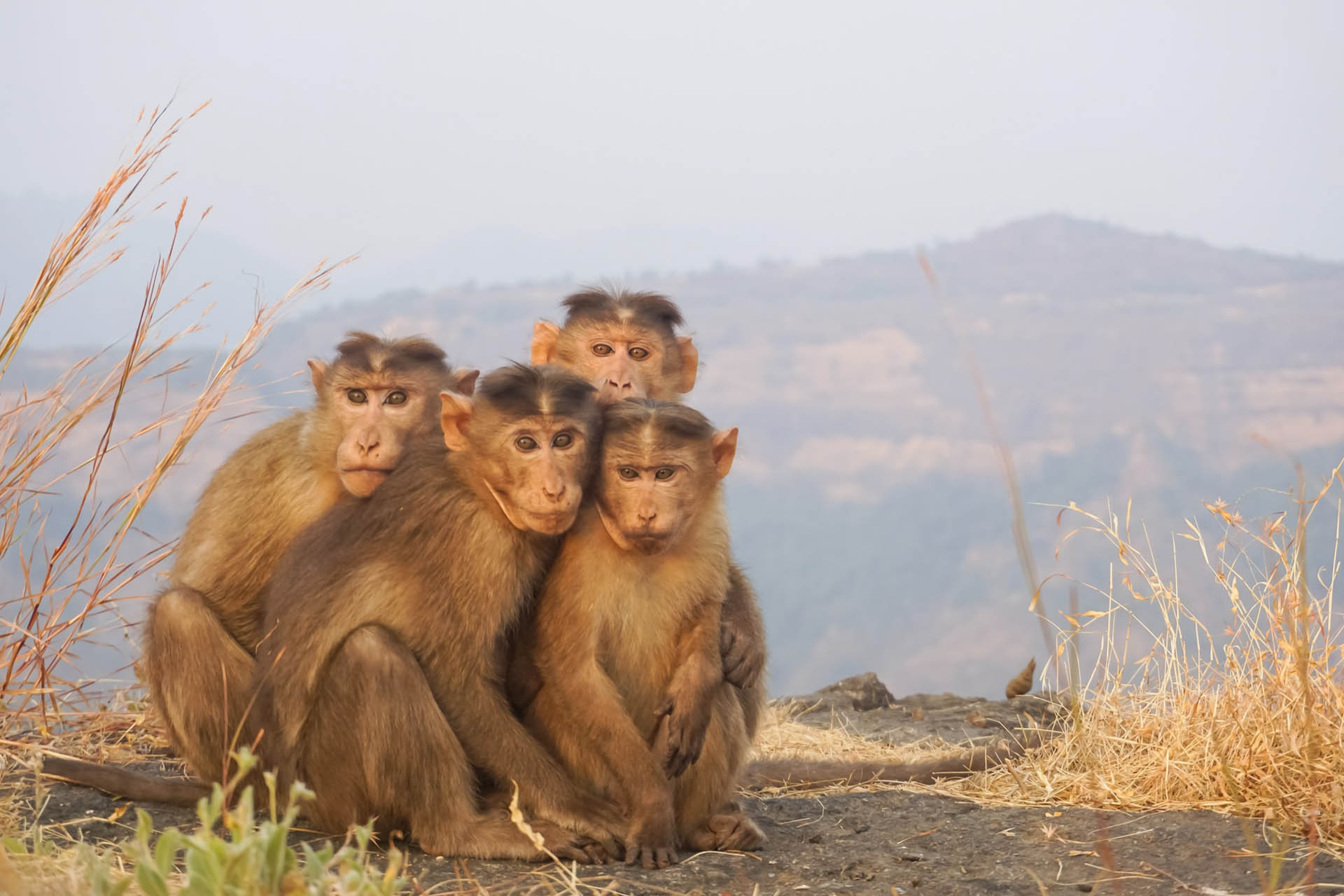 Matheran Featured image Monkeys