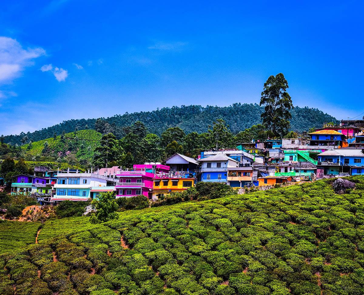 Munnar - Kerala - Icon