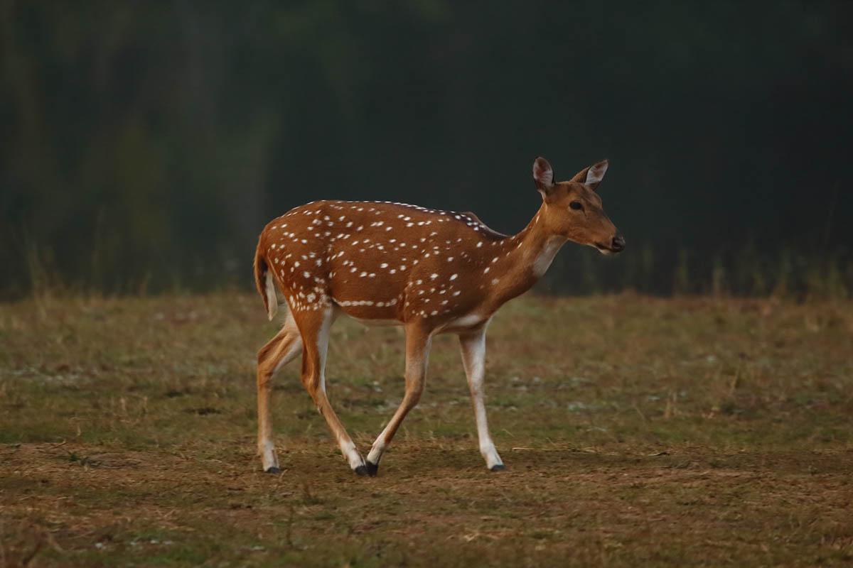 National Parks - Karnataka - Featured