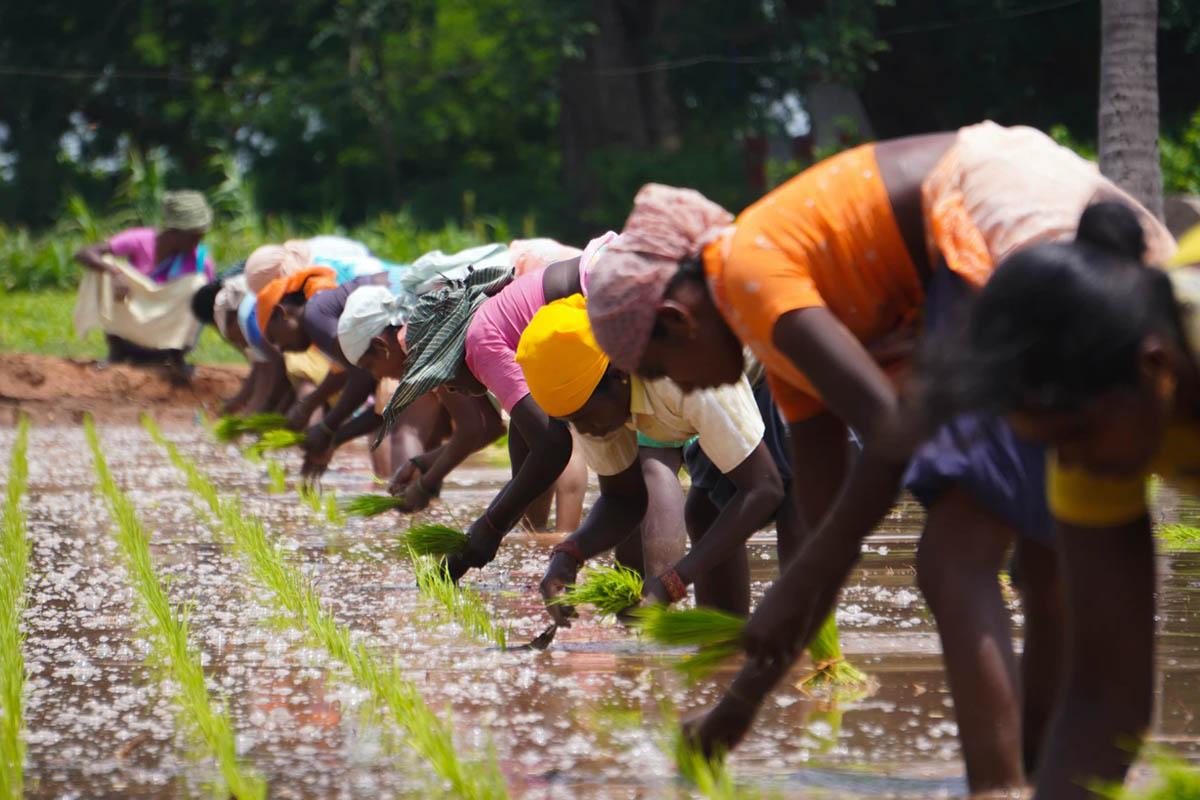 Rural and Remote - Tamil Nadu - India