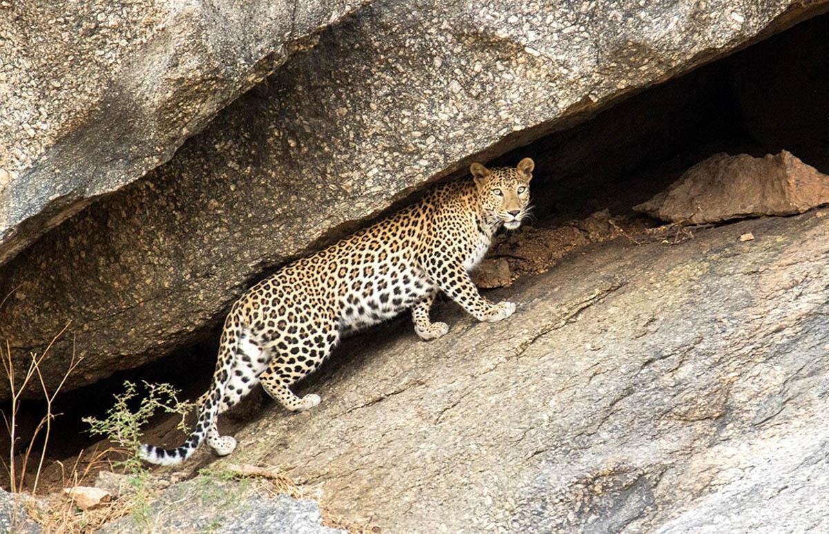 Bera Safari Lodge - Camps & Lodges - Rajasthan - Big 1