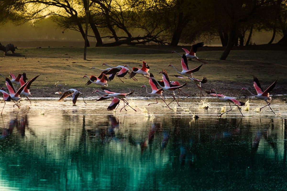 Gujarat - Flamingos