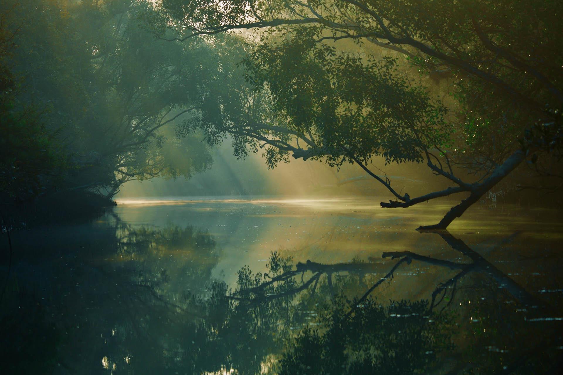 Sunderbans Featured Mangroves
