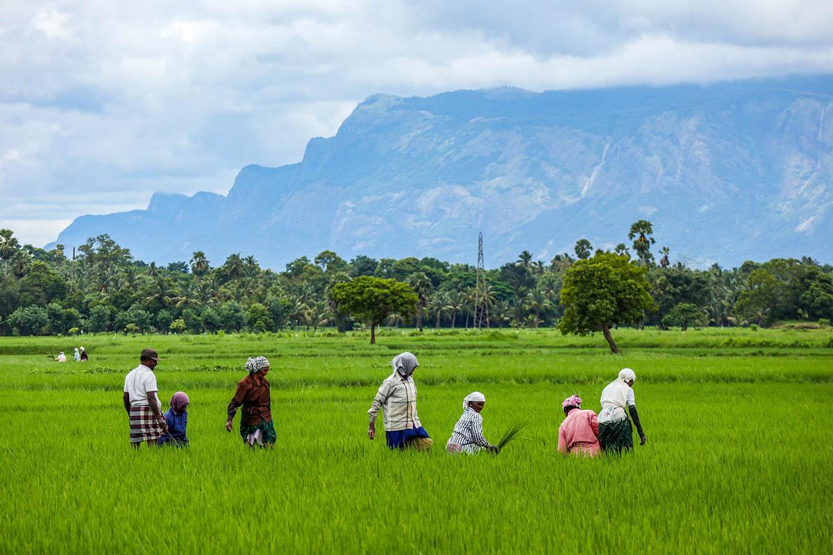 Rural and Remote - Kerala people