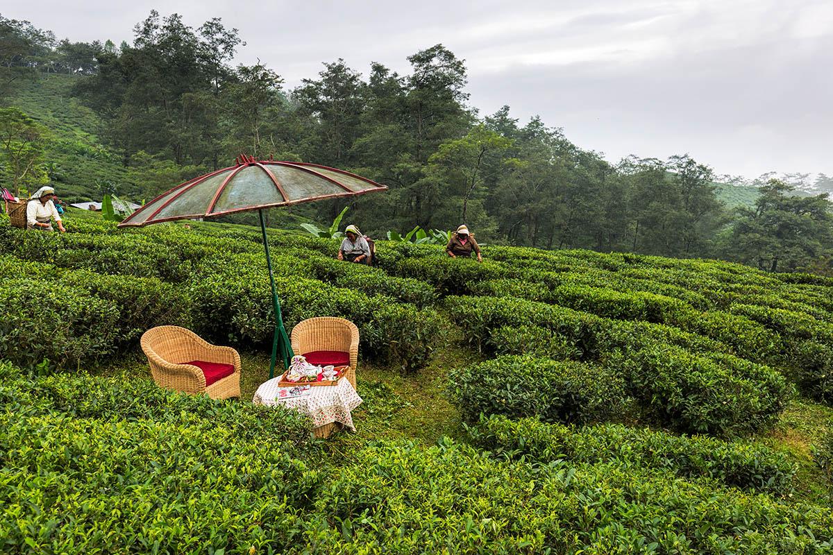 Ging Tea House - Darjeeling - Eastern - Big1
