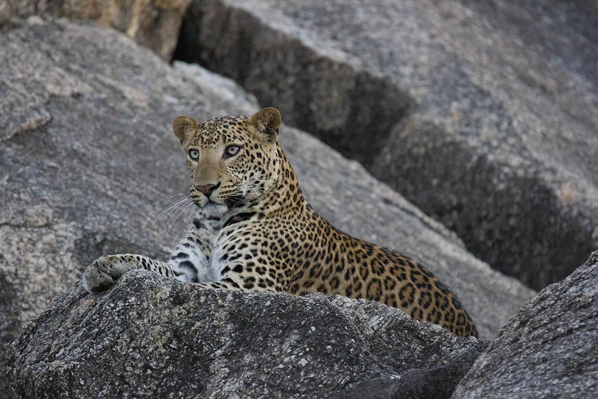 Bera Safari Lodge - Camps & Lodges - Rajasthan - Icon