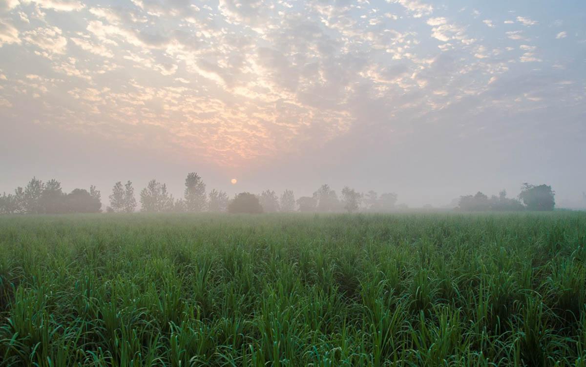 Punjabiyat - Amritsar Countryside - Norhern - Icon