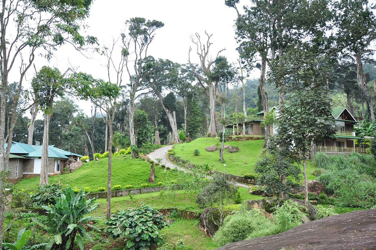 Neelakurunji - Munnar - Kerala - Big 2